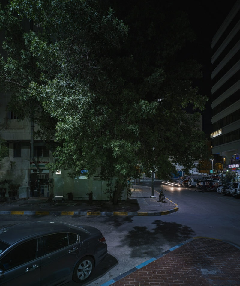 Abu Dhabi - Trees